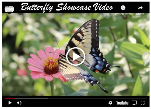 Butterflies at Home Showcase Video ... watch it now!