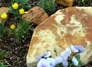 Rocks set among nectar plants provide a great place for butterflies to rest, and warm up!